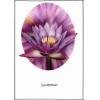 Dazzeling Purple Water Lily Wedding Invitation